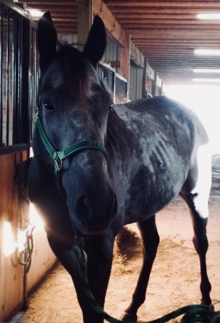 Eye Dash For Cash, American Quarter Horse Gelding for sale in Ohio