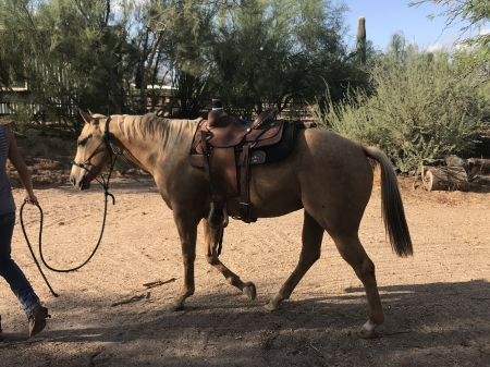 Abby, Quarter Horse Cross Mare for sale in Arizona