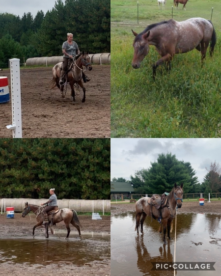 Lakota, Appaloosa Mare for sale in Wisconsin