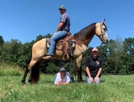 They Call Me Starbucks  (Please Read Description) , Kentucky Mountain Saddle Horse Gelding for sale in Kentucky