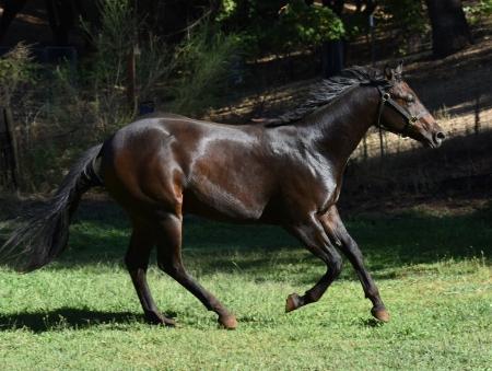 Luken for an Invite, American Quarter Horse Gelding for sale in California