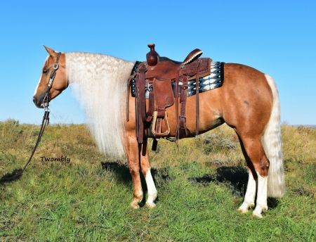 Chics Luv Facebook Reining/Trail/Family, American Quarter Horse Mare for sale in Nebraska