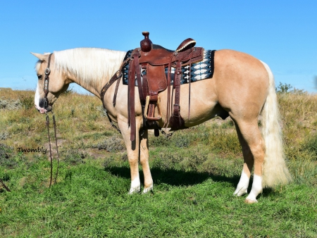 Dodge This Gun Reining/Family/Ranch, American Quarter Horse Gelding for sale in Nebraska