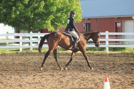 Now you will know, Thoroughbred Mare for sale in Ohio