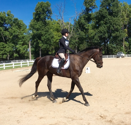 Broadway, Thoroughbred Gelding for sale in Ohio