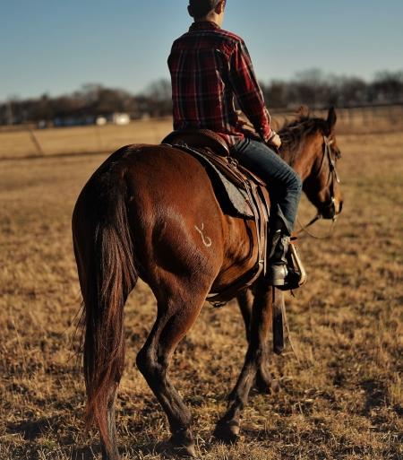 HANK, American Quarter Horse Gelding for sale in Oklahoma