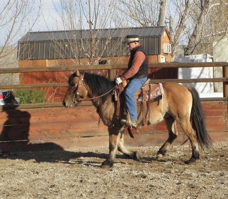 Carhartt of McClellan, Highland Pony Gelding for sale in Wyoming
