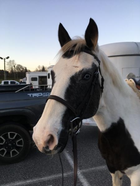 Rain, Quarter Horse Cross Mare for sale in Georgia