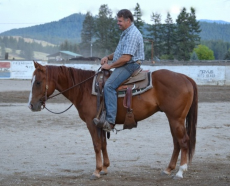 Princeston, American Quarter Horse Gelding for sale in Washington