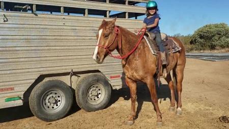 Comanche: Super Cool, Gentle Gelding for Sale!, American Quarter Horse Gelding for sale in California