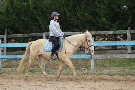Macaroni Pony, Ponies (All) Gelding for sale in North Carolina
