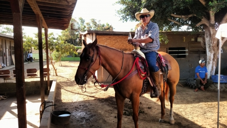 Caporral, Quarter Horse Cross Gelding for sale in California