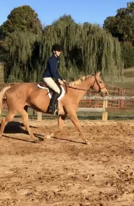 Scarlet, Palomino Mare for sale in Virginia