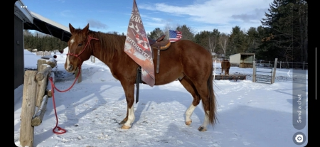 Bubba, American Quarter Horse Gelding for sale in Wisconsin