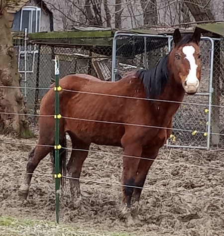 Candy, American Paint Horse Association Mare for sale in Ohio