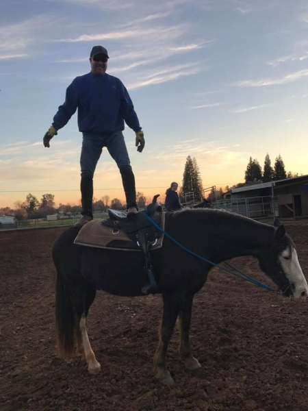 Cash, Tennessee Walking Horses Gelding for sale in California