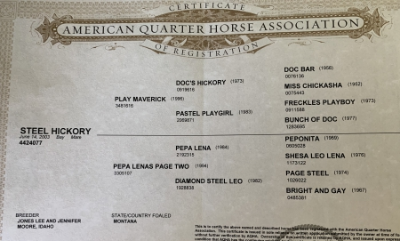 Steel Hickory , American Quarter Horse Mare for sale in Tennessee