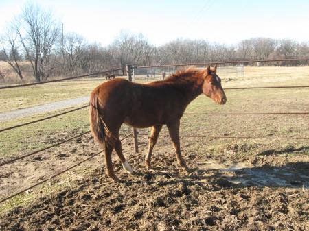 Boons Smart Merada, American Quarter Horse Stallion for sale in Iowa