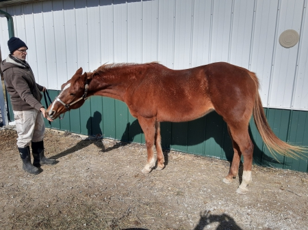 Emmie, American Quarter Horse Mare for sale in Indiana