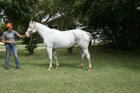 Alias Ghost Coosa, Appaloosa Mare for sale in Oklahoma