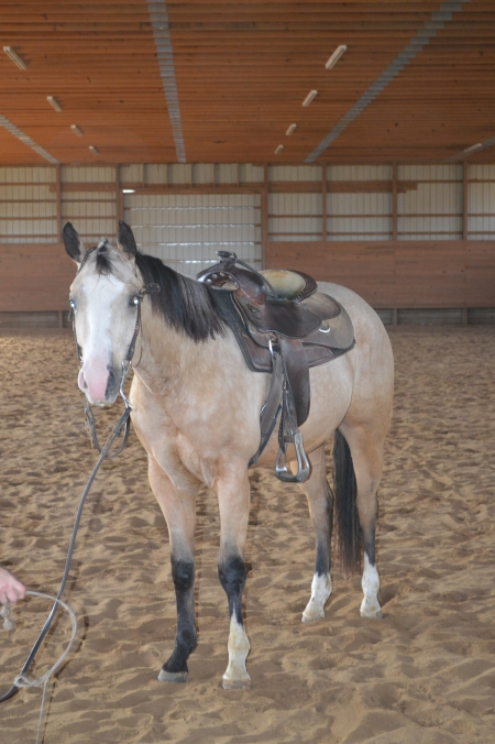 Better Built Machine, American Quarter Horse Gelding for sale in Connecticut