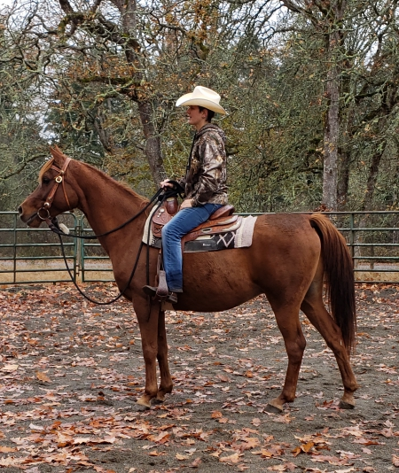Brego, Arabian Gelding for sale in Washington
