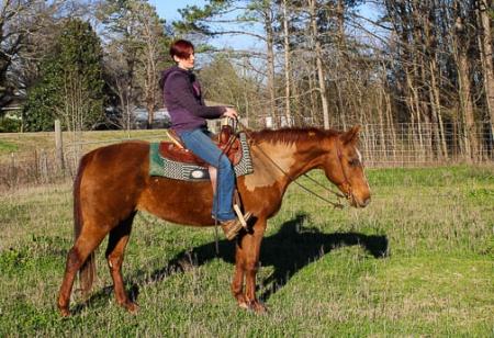 ASPEN, American Quarter Horse Mare for sale in Alabama