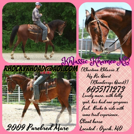 Khlassic Khameo NB, Arabian Mare for sale in Missouri
