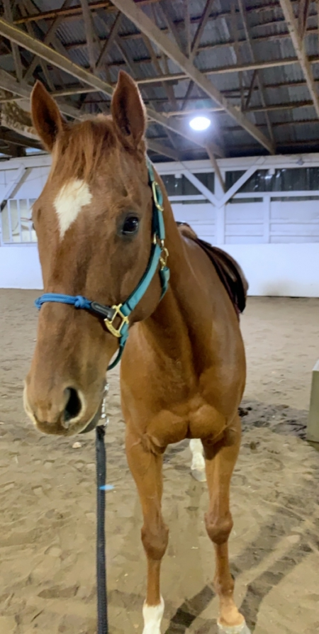 Hewgo, Thoroughbred Gelding for sale in Connecticut