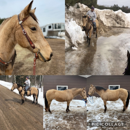 Medora, American Quarter Horse Mare for sale in Wisconsin