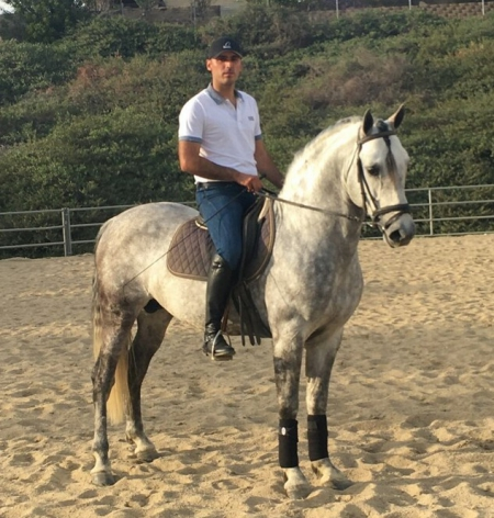 Diamante - Grey Andulusian Stallion, Andalusian Stallion for sale in California