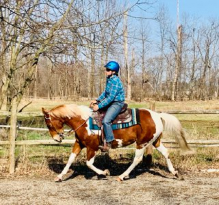 All Around, Flashy Trail Horse Deluxe- 9 yr old Sorrel Paint Gelding For Sale -Bombproof Western & English!, American Paint Horse Association Gelding for sale in Pennsylvania