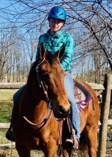 Handsome Trail Horse Deluxe- 16 yr old Bay Quarab, Quarab Gelding for sale in Pennsylvania