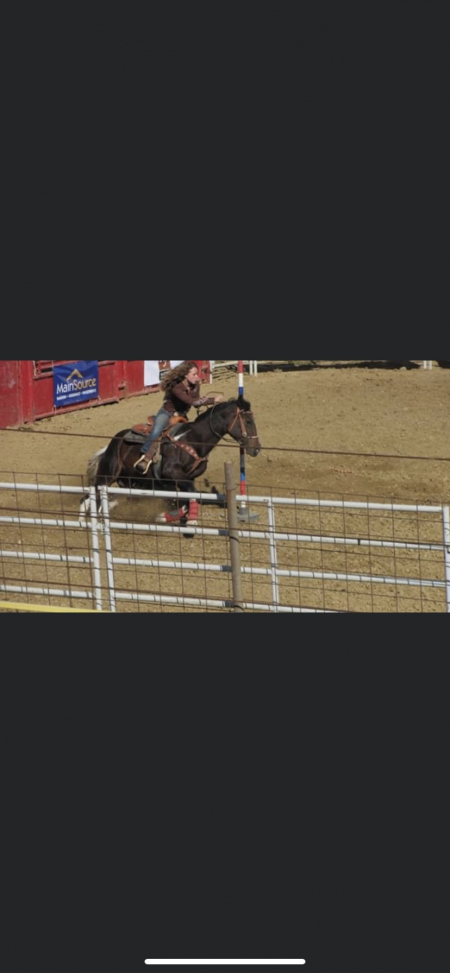 Cupid, Quarter Horse Cross Mare for sale in Indiana