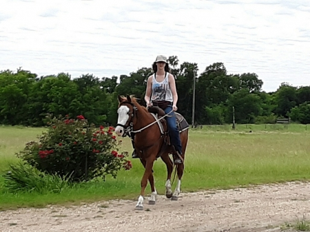 Remington, Other Stallion for sale in Texas