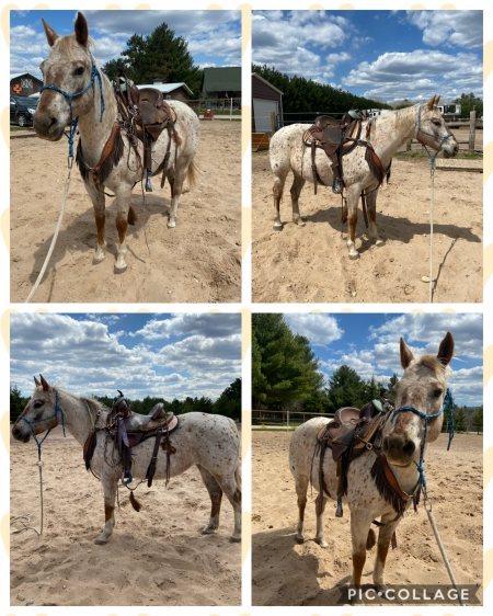 Miss missy Peponita , Appaloosa Mare for sale in Wisconsin