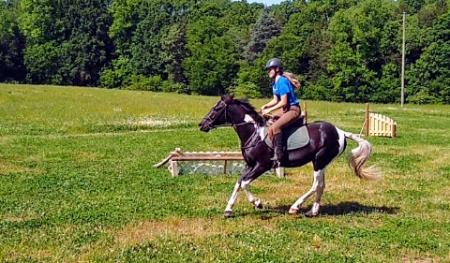 The Duke of Destiny, Quarter Pony Gelding for sale in North Carolina