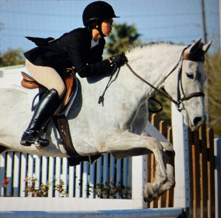 Wings From Heaven, Quarter Horse Cross Mare for sale in Texas