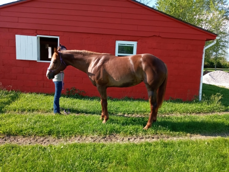 Jaded Southern Image, American Quarter Horse Mare for sale in Indiana
