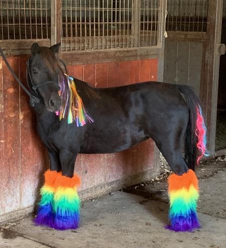 Luna , Ponies (All) Mare for sale in Colorado