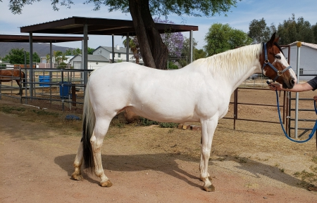 Rain, Other Mare for sale in Arizona