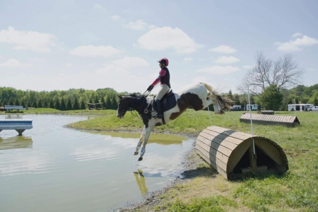 Dare to Encounter, American Warmblood Gelding for sale in Maryland