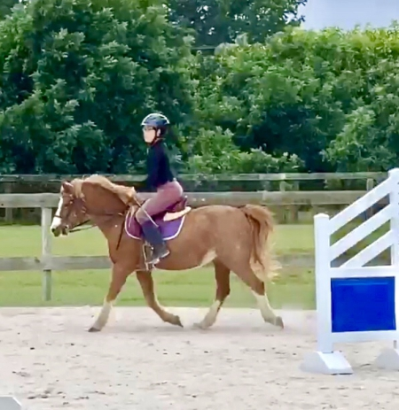 Stan the Man, Welsh Pony Gelding for sale in Florida