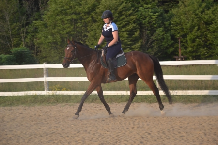 Beautiful bay OTTB gelding, Thoroughbred Gelding for sale in Ohio