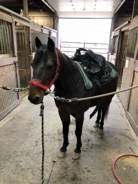 Tony, Ponies Gelding for sale in Ohio