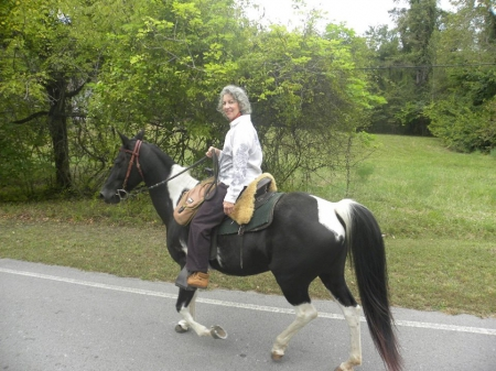Diamond, Spotted Mountain Horse Mare for sale in Tennessee