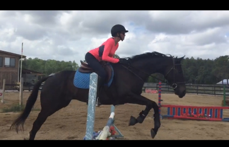 Silent Patience, Thoroughbred Gelding for sale in Florida