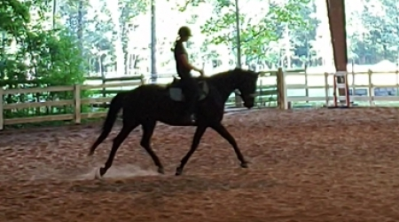Nala, Oldenburg Mare for sale in Tennessee
