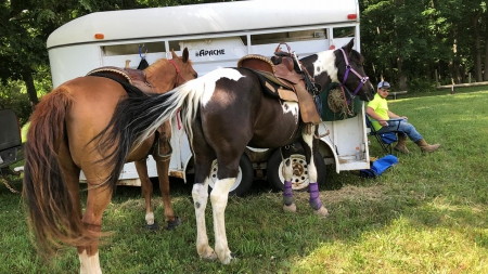 Raven, Spotted Saddle Mare for sale in Pennsylvania