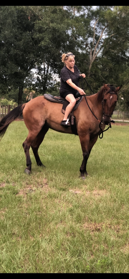 "Hancocks Poco Hank A/K/A ""Bonez"", Warmbloods (All) Gelding for sale in Florida"